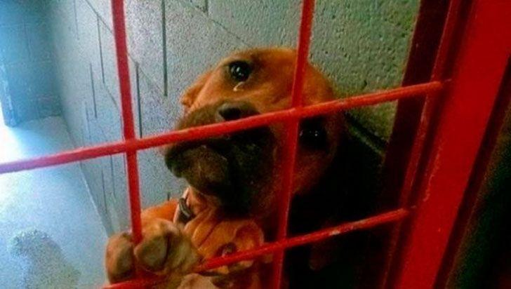 Этот снимок несчастной собаки из приюта, сделанный волонтерами, кардинально изменил ее жизнь
