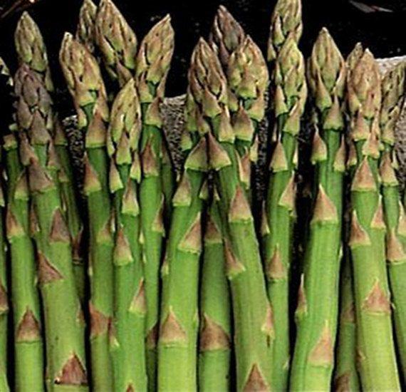 Mary Washington Asparagus Seeds Heirloom (Certified Organic)