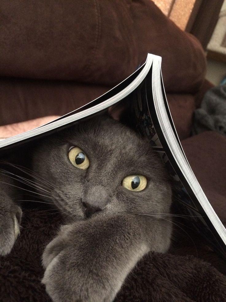 для картинки умных кошек поразил