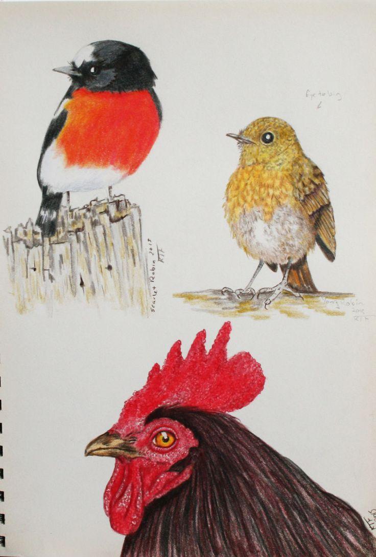 https://flic.kr/p/yR2WPq   Drawing more birds   Color pencil