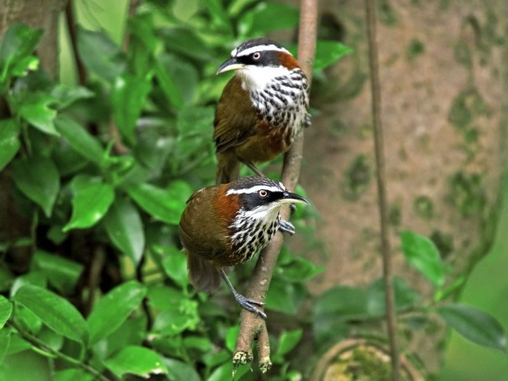 Bird Sanctuaries in Arunachal Pradesh, India @ Sanctuariesindia.com
