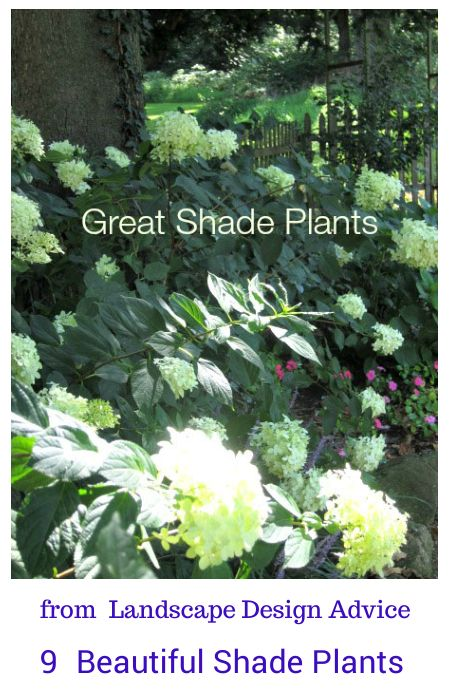 115 best images about shade plants on pinterest gardens for Best low maintenance plants for shade