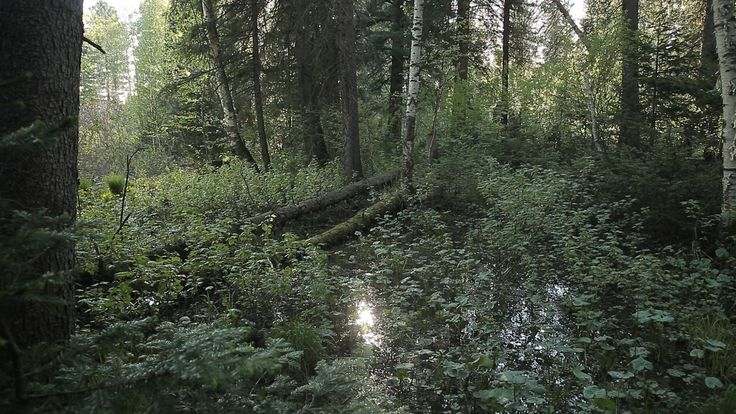 российская тайга скалы - Поиск в Google
