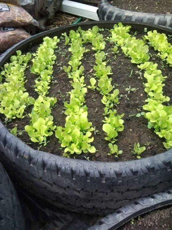 Trucuri pentru ingrijirea plantelor, dar si o galerie foto superba gasiti in urmatorul articol. Trebuie sa va inspirati si voi de aici!