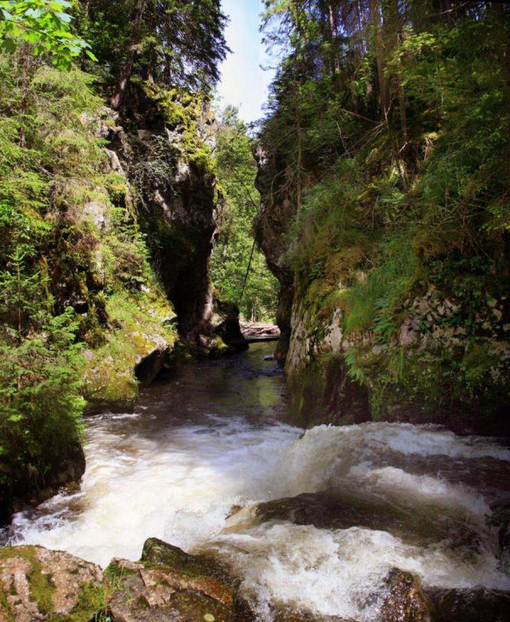 Schluchtensteig Schwarzwald | Wutachschlucht als chilliger Wanderausflug für die ganze #Familie im #Sommer