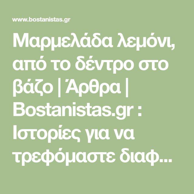 Μαρμελάδα λεμόνι, από το δέντρο στο βάζο | Άρθρα | Bostanistas.gr : Ιστορίες για να τρεφόμαστε διαφορετικά