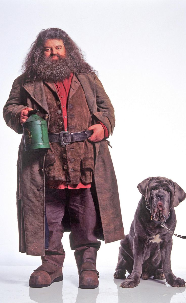 Hagrid and Fang, Harry Potter fang is seriously one of my favorite characters