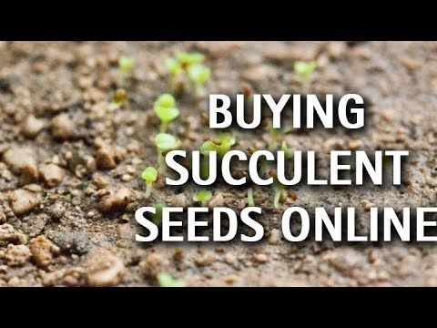 Succulents - Buying Seeds Online
