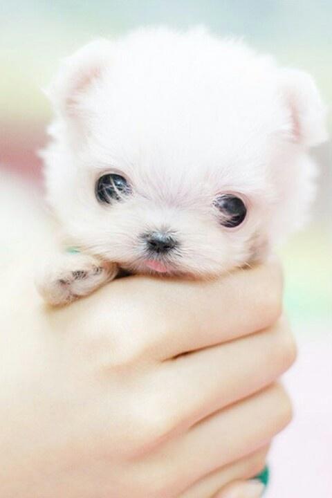 Crazy cute puppy