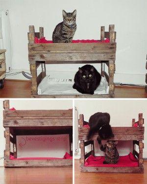 Mooi katten stapelbed