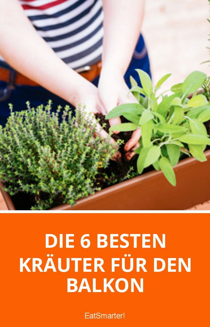 Die 6 besten Kräuter für den Balkon | eatsmarter.de