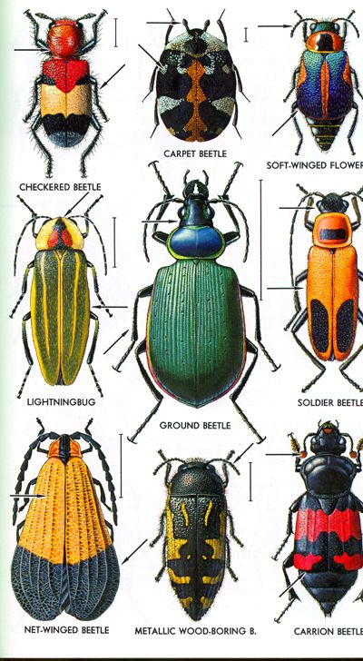 THE MAJOR INSECT ORDERS | Super! Tons of insects
