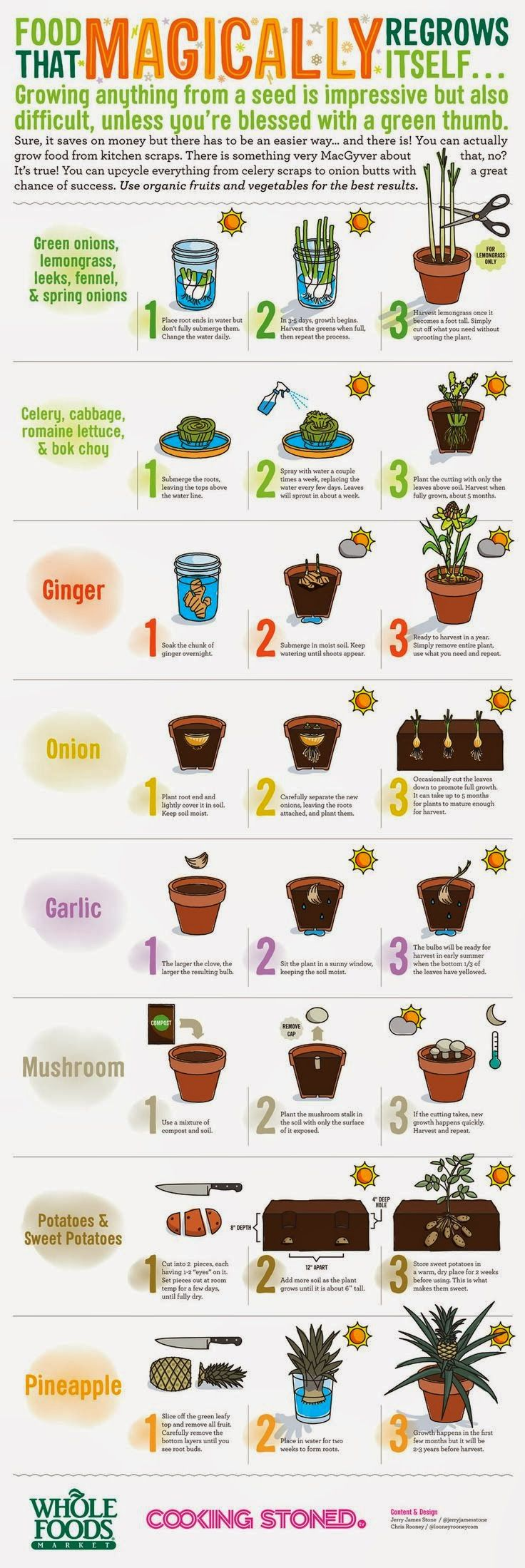 Food that re grows itself
