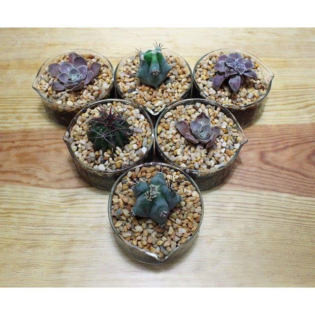 Centros de mesa para @bunamx ❤️ con plantas mexicanas en peligro de extinción #centrodeadopcion #ibunam #jardinbotanico #centrosdemesa #decoracion #decor #plantstagram #unam #suculentas #cactus #cristalizador #lab #rau #mexico