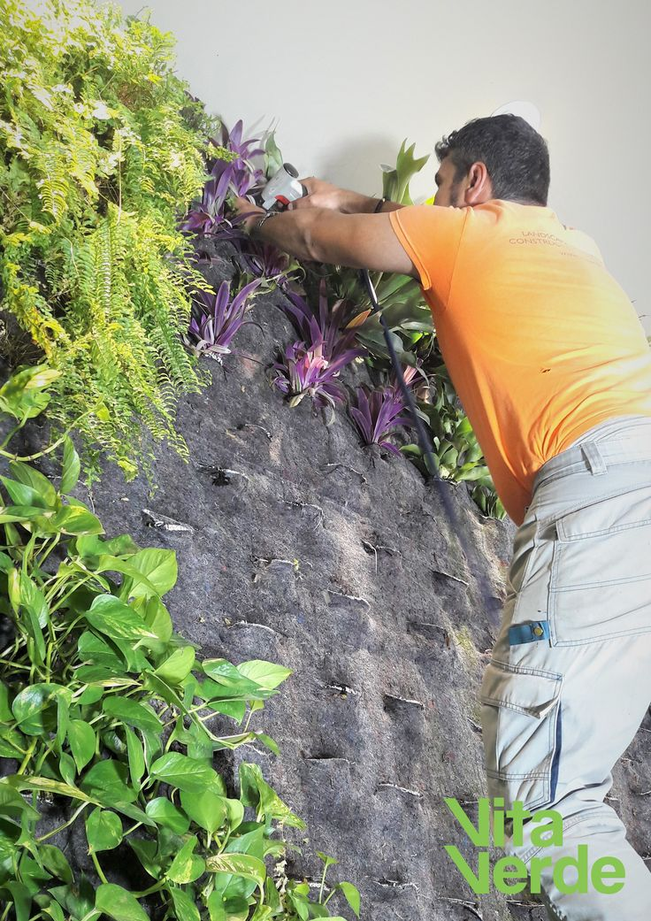 Time for some vertical garden maintenance! Happy Monday. :)    #vitaverde_gr #notyourordinaryspace #verticalgarden #greenwall #greece #thessaloniki #athens #landscapearchitecture