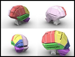 "how to make the inside brain model  | The Brain"" Papercraft ~ Paperkraft.net - Free Papercraft, Paper Model ..."