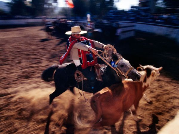 Cowboy  by Melissa Farlow    With practiced skill and natural flair a Chilean cowboy, or huaso, lassoes a steer without losing his traditional straw hat, known as a chupalla. Huasos occupy a beloved place in Chile's culture, just as cowboys do in the U.S.