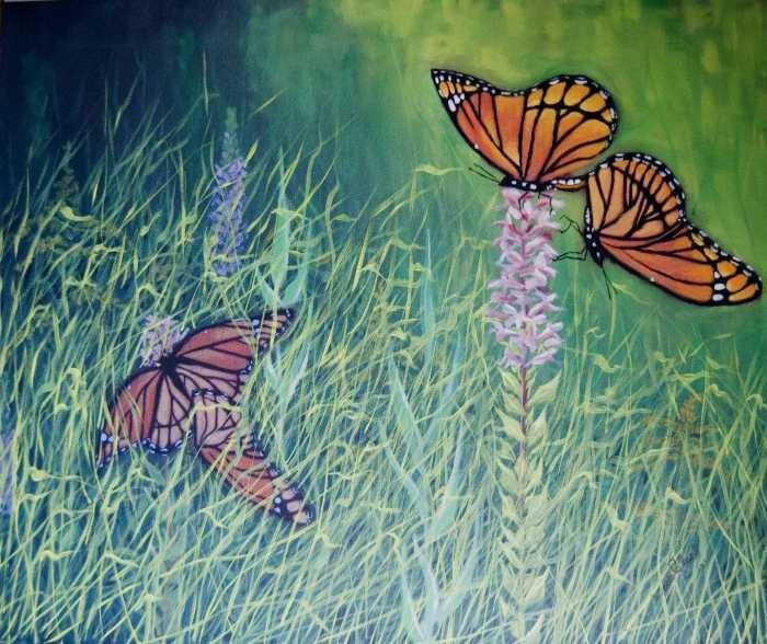 Mating Season Monarchs-Ojibway Prairie Grassland.