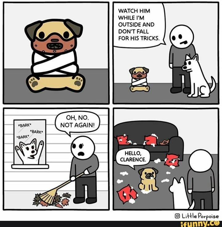 Watch Him While I M Outside And Don T Fall For His Tricks Ifunny Funny Memes Stupid Funny Memes Memes