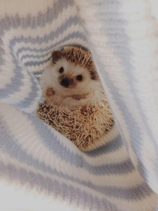 Cute hedgehog
