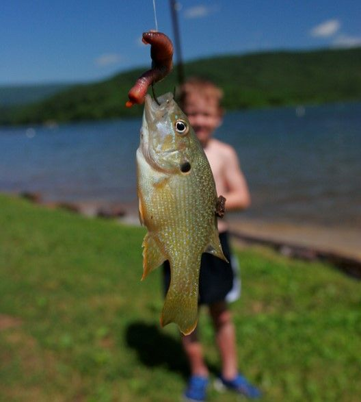 36 best images about lake raystown resort on pinterest for Fishing lakes in pa