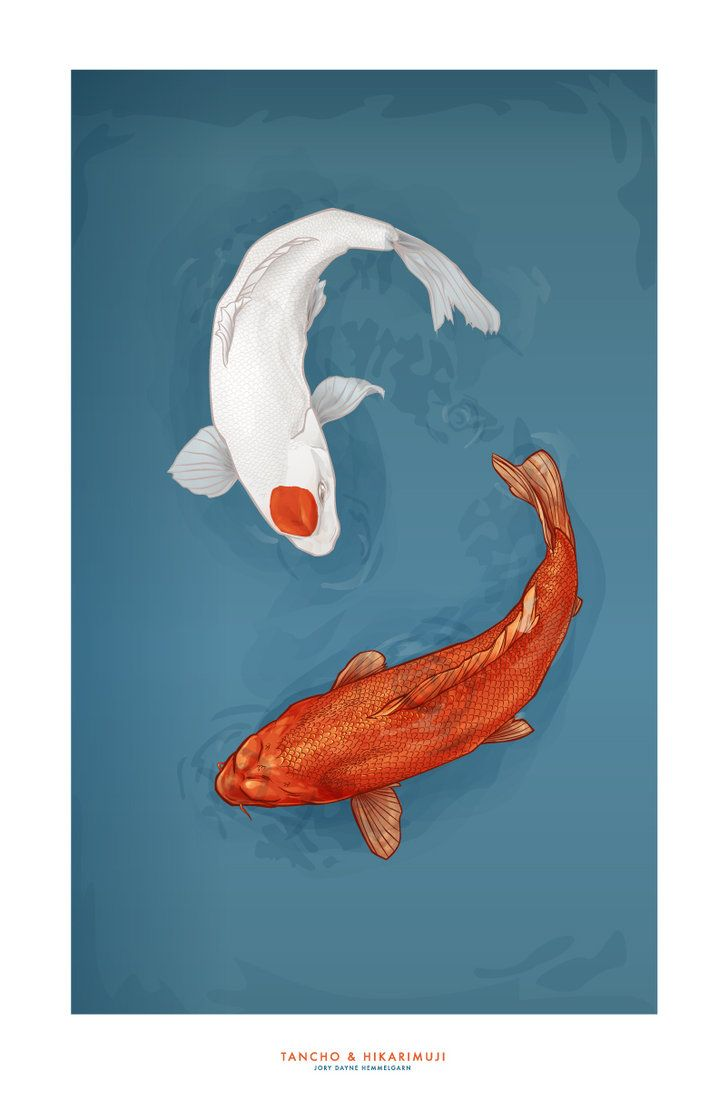 Tancho hikarimuji by novenarik deviantart also for Tancho koi fish