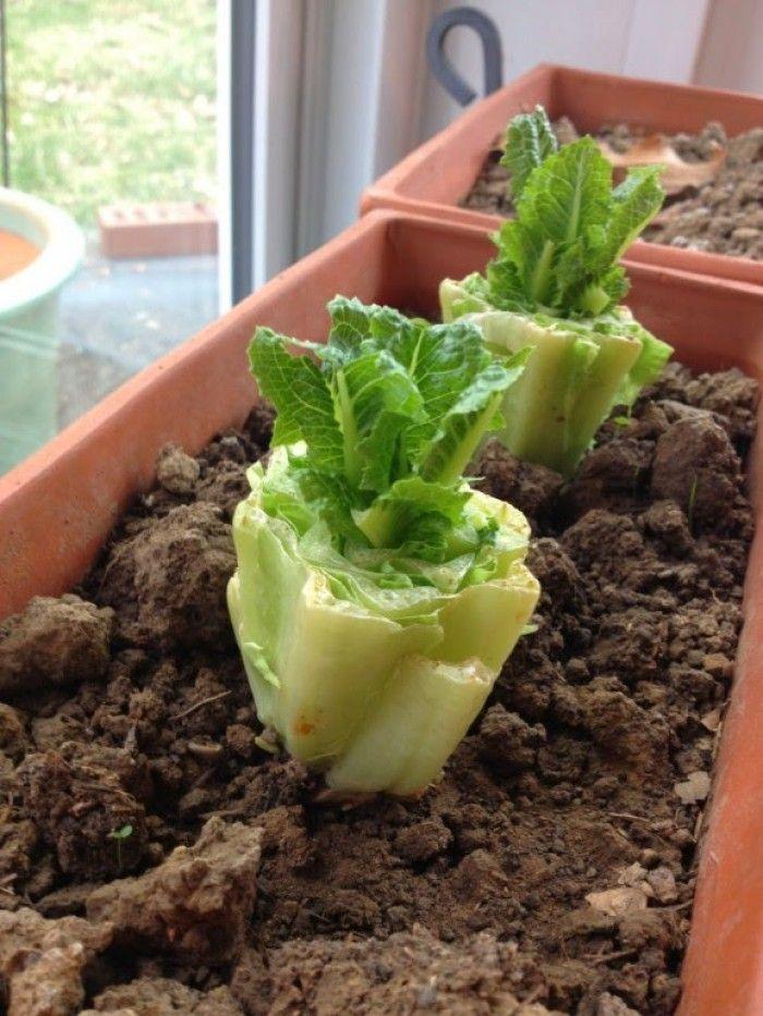 8 groenten die je opnieuw en opnieuw kunt laten groeien.Wil je optimaal van groente kunnen genieten, ga dan snel naar de bron.