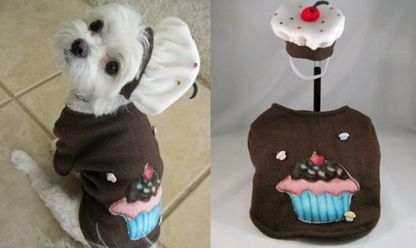 Kittens Puppies and Cupcakes: Teacup Maltese Cupcake Halloween Costume