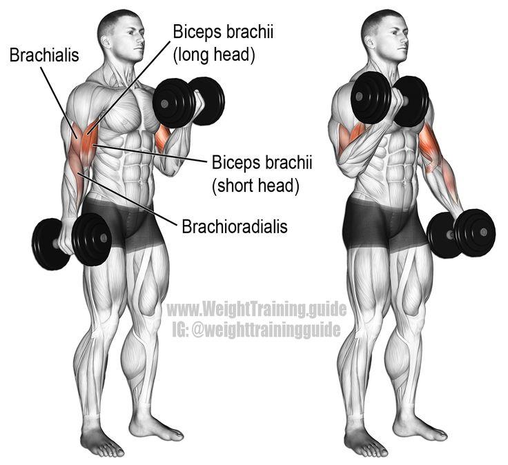 Curl con Mancuerna alternando. Un ejercicio de aislamiento. Músculo objetivo: Bíceps braquial. Sinérgicos: Brachialis y Brachioradialis.