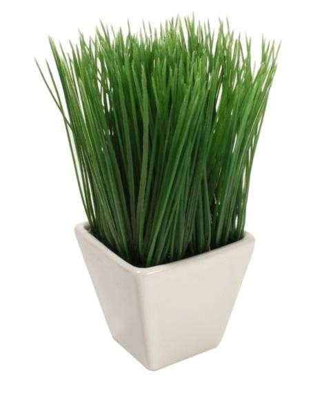 Potted Onion Grass | Vegetables, Bathroom decor, Onion