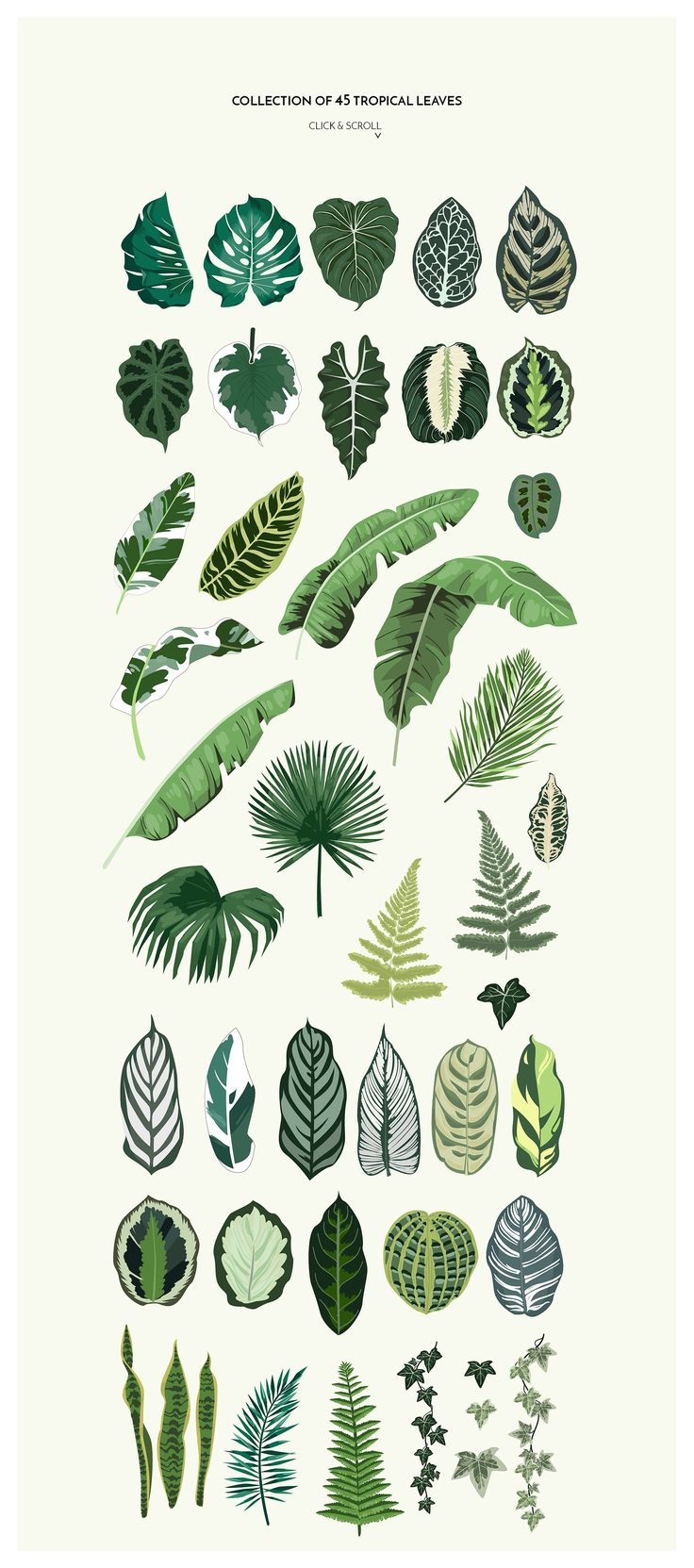 TROPICANA: tropical leaves&patterns by Lana Elanor on Creative Market