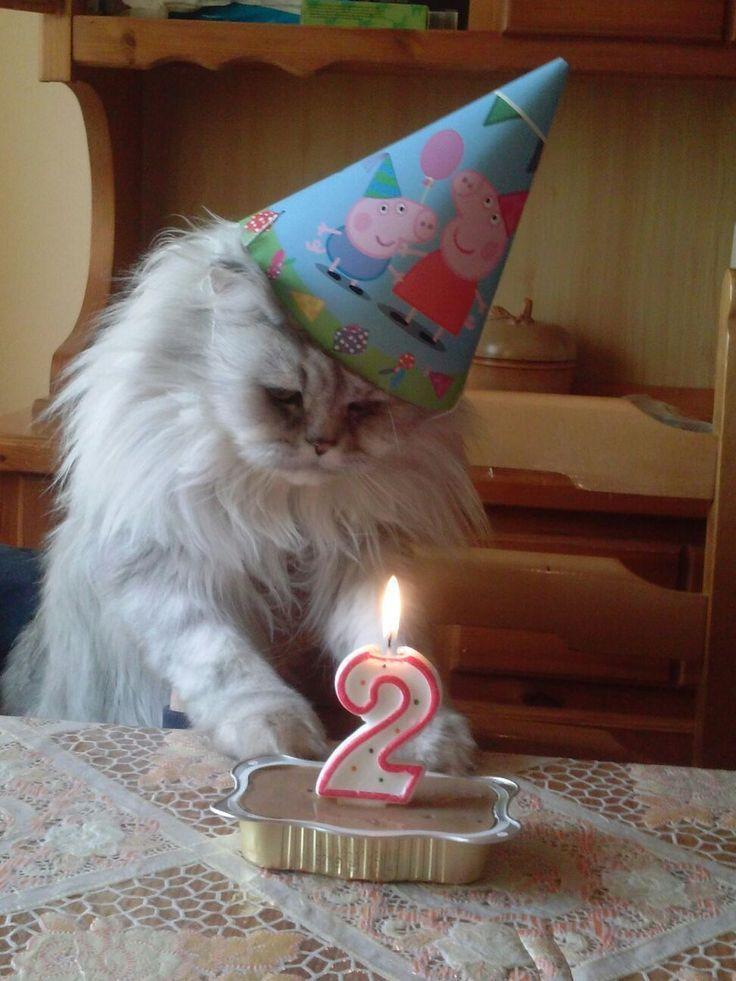 у кота день рождения 4 года редакции музыкальных программ