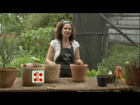 Saiba como cultivar alecrim em casa