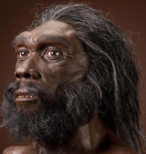 Las mandíbulas también poseían una gran fuerza y robustez .La parte trasera del cráneo es más redondeada que en H. erectus/H. ergaster, y las mejillas son infladas, como en los neandertales, aunque la cara es más plana. Su capacidad neurocraneal no dista mucho de la del hombre moderno, rondaba los 1350 cm³. Otro parecido con el Homo sapiens actual era su aparato fonador. Esto dio a pensar que el lenguaje, entendido de una manera quizás diferente a la actual.
