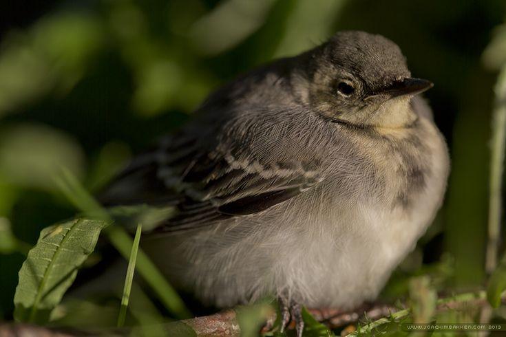 Bird sitting in the grass.
