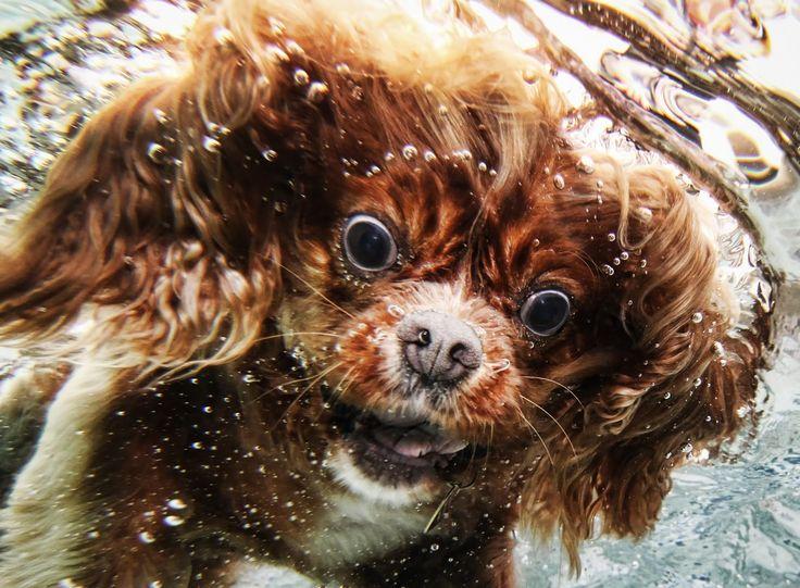Underwater Shot!