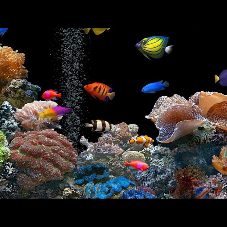 46 best saltwater tank images on pinterest aquariums for Cool tropical fish