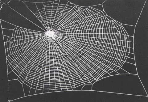 Spiders Weave Better on LSD-25
