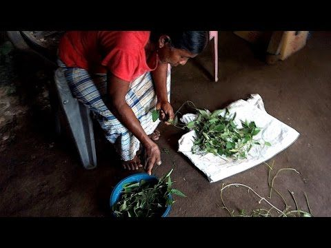 Kang kung recipe - Water spinach with coconut - authentic Sri Lankan video recipe filmed in Sri Lankan village (source: my personnal food and travel blog / vlog with recipes, authentic video recipes, street food, food and travel documentary, travel info and more. Welcome! :) )