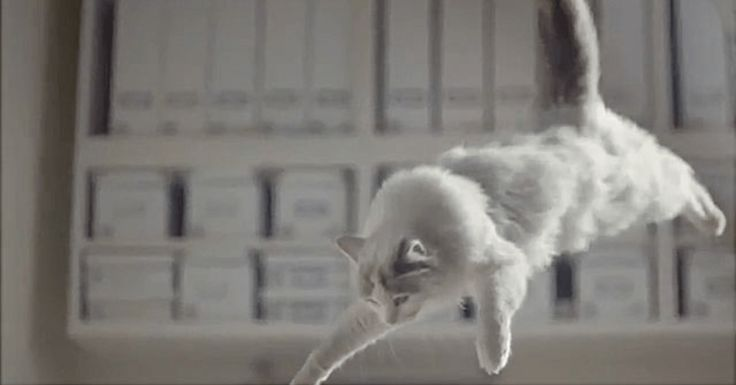 IKEA release 100 cats into a store to create a purrfect feline flash mob!