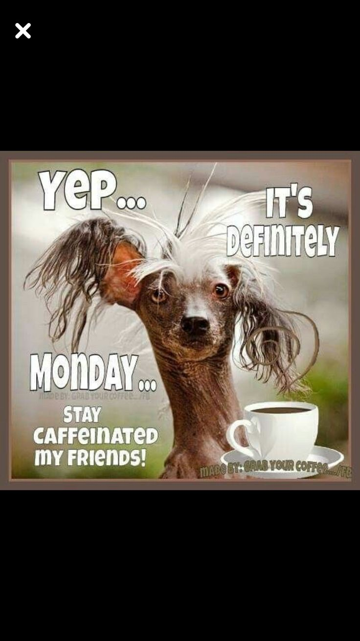 Monday Coffee | Funny good morning quotes, Good morning ...