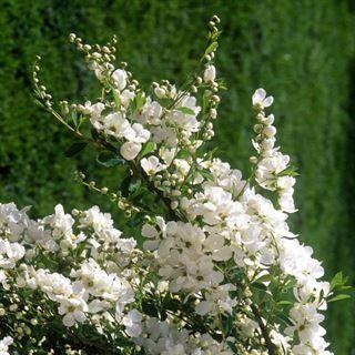 Buskar med blommor är vackra i trädgården. Här listar vi tio fantastiskt vackra blommande buskar, och ger dig både bra tips och skötselråd.