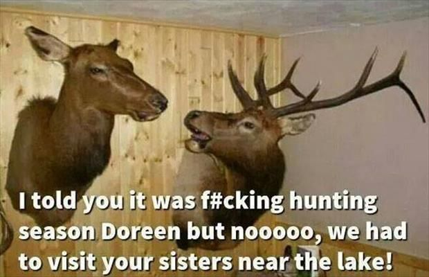 25+ Best Ideas About Funny Deer Pictures On Pinterest