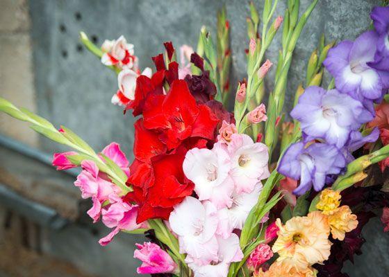 Gladiolus Bouquet | The Home Depot's Garden Club