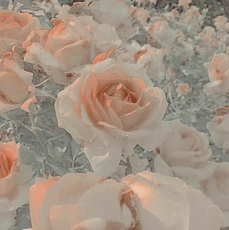 Картинка с эффектами роз