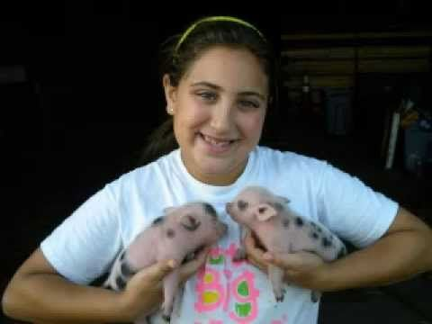 AllTheFunIn1.com / Miniature Teacup Pigs For Sale, Mini, Micro Piglets For Sale