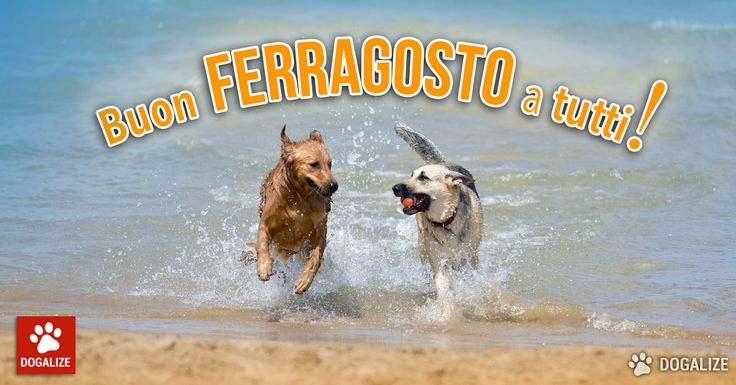 Best Social Network App For Your Dog