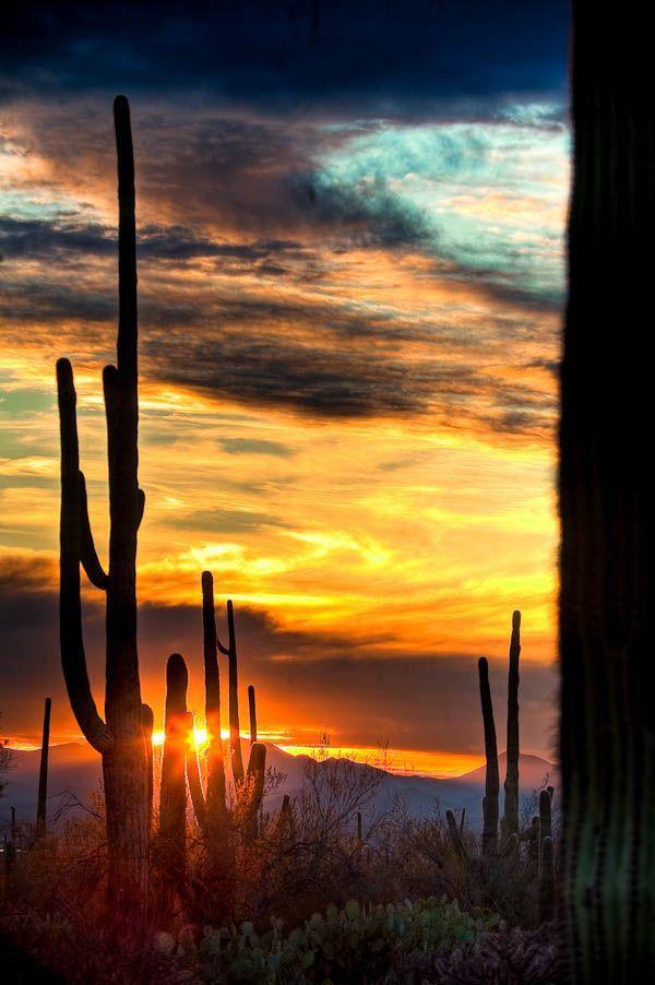 Cactus sunset, Saguaro National Park, Arizona