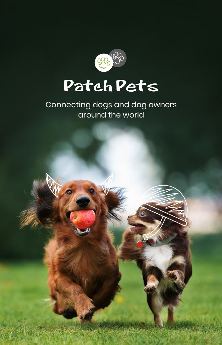 Home Patchpets The Number One Social Media Dog App Dogs Find Pets Dog Friends