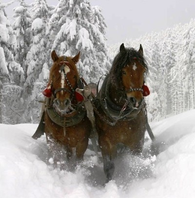 .: Sleighrid, Winter Scene, Buckets Lists, Jingle Belle, Winter Wonderland, Clydesd Hors, Drafting Off, Sleigh Riding